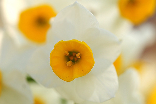 Narcissus by naruo0720
