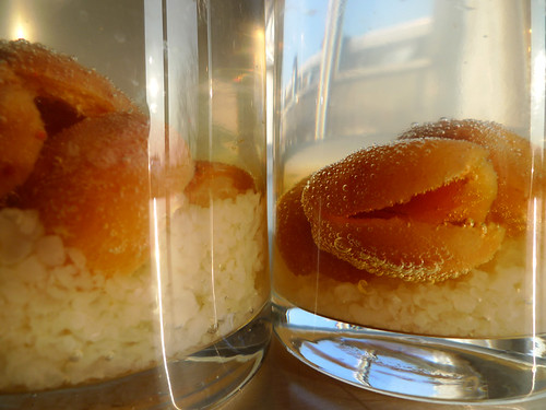Dried apricots and kefir grains
