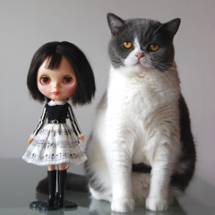 sitting together ( oink ) Tags: kenner blythe lennythecat poupeemecanique restoredbyleo