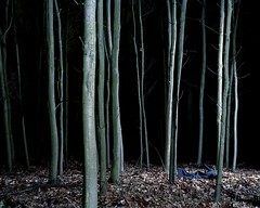 Florian Beckers / Millennium Images, UK (niall_oleary) Tags: blue trees tree fall nature strange leaves mystery night forest dark season outside outdoors weird leaf woods moody exterior seasons dress darkness natural outdoor bare victim seasonal traces tranquility nobody eerie creepy spooky odd crime dresses mysterious trunk tall unusual dried trunks evidence uncanny deserted bizarre forests tranquil atmospheric endless thriller tranquillity peculiar uncovered