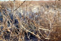 February Day (forty-onecrush) Tags: sunset plants desert az february withmyson