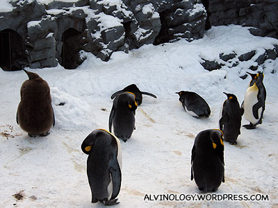 open-air penguin enclosure