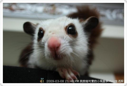 09年二三月小飛鼠Meiz生活照 (14)