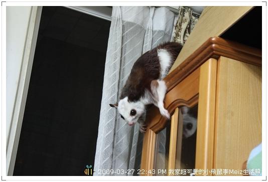 09年二三月小飛鼠Meiz生活照 (42)