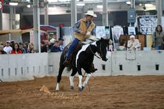 Paint horse stallion (larissa_allen) Tags: indiana equines horsefair paintstallion hoosierhorsefairandexpo hoosierhorsefair hoosierhorsefairexpo hoosierhorsefairexpo2009 hoosierhorsefairandbreedexpo2009 painthorsestallion paintreininghorse larissaallenhorses