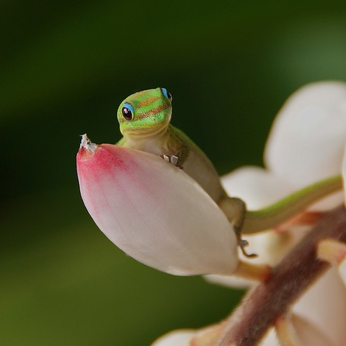 Gecko #4