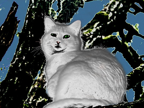 352 White Cat on the Tree