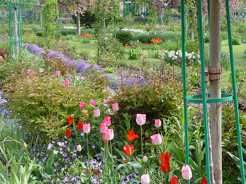 Tulips in Giverny