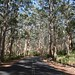 Karri Forest, Margaret River