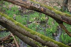 Frühlingserwachen am Nordkanal (Heidi St.) Tags: germany deutschland nrw frühling wiosna nettetal krickenbeckerseen niemcy krickenbeck kreisviersen polvensee