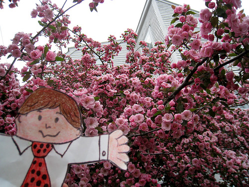 flat stanley: posing with flowering tree