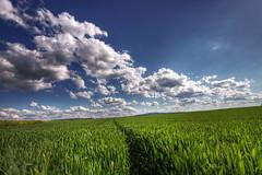 Die Wetterau ( rednaxela_west) Tags: blue sky green sunshine clouds landscape deutschland hessen natur bad feld wolken sigma fields grn landschaft 1020 blauer fiels sonnenschein nauheim wetterau himmerl eos50d hochweisel bitzbach