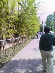 六本木ヒルズ テレ朝通りの竹