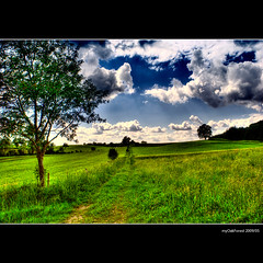 A Way between Meadows (MyOakForest) Tags: tree clouds way meadow meadows wiese wiesen wolken baum platinumheartaward