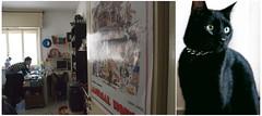 Animal House (Ilario 1979) Tags: italy black rome roma cat blackcat casa nikon italia gatto nero varie piero gregorio stanza gattonero ilario fotografiadomestica coseacaso sperochepierononmidenunciperlusodellasuaimmagine