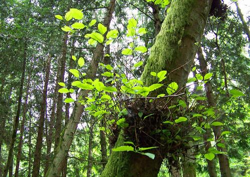 Baby Trees