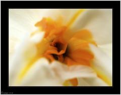 Opening Up (^~^Pointyears) Tags: flower raw olympus ~ garrettcounty pointyears kindaabstract e520 borderfx 35mmzuikomacro madewithmacintosh aperture3
