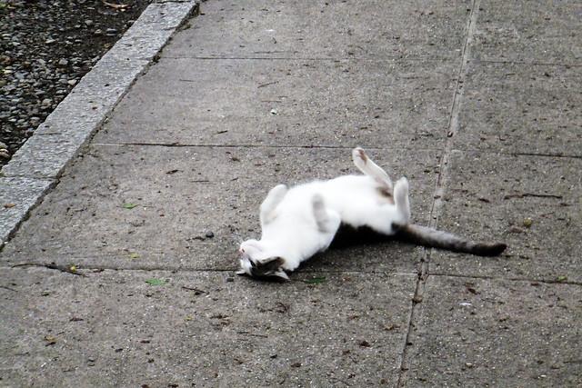 Today's Cat@2011-06-01