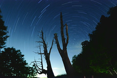 () Tags: night taiwan   startrails        coupletree
