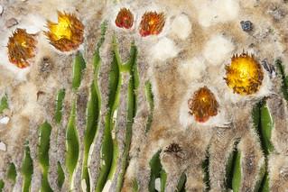 Cactus o ¿van Gogh?