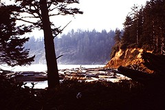 1969-03 Waterfall & log jam at Short Sands Beach, Oswald West State Park, OR 037 (bsnenninger) Tags: ocean trees 1969 beach pacific or silhouettes logs waterfalls oswaldweststatepark stateparks shortsandsbeach orstateparks
