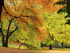 Fall foliage in Central Park, New York City (I...