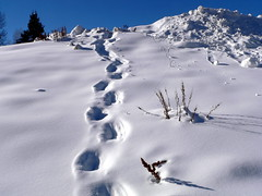 Footprints in the snow - Colorado