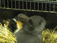 konijn02 (WChevelenko) Tags: gezelligheid maaltijd