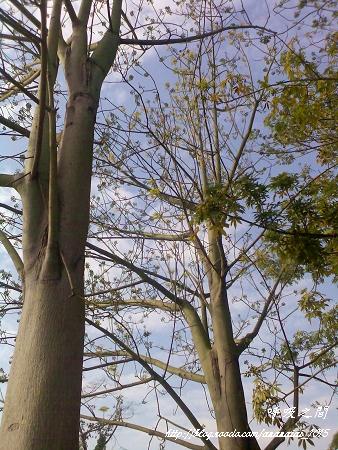 遊戲場大樹