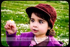 (Becka Lynn Photography) Tags: ca daisy littlegirl sonomacounty santarosa fieldofflowers daisyfield wideopenspaces ef2470f28l purplesweater toddlergirl canon40d littlegirlinfield
