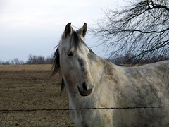 A Horse With No Name (sweet_tbranscum) Tags: ourkentucky