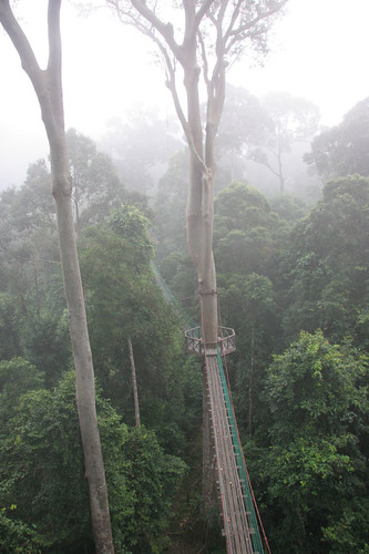 Canopy walk at Borneo Rainforest Lodge