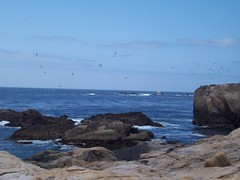 Weston Beach (tmrae) Tags: coast monterey pacific pointlobos