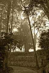 DSC06713 (Schinke) Tags: brazil brasil photo foto sony natureza harry estrada neblina danilo teresopolis a700 schinke araquem