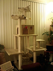 Best! Cat Tree! Evar!