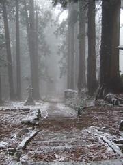 Saikan path (sbszine) Tags: mist snow leaves japan forest landscape path steps  lantern yamagata  hagurosan  35mmequivalent