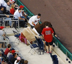 Washington Nationals racing president Teddy Roosevelt runs blindfolded into the Nationals Park stands