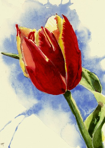 Tulip in Red