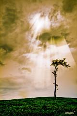 Feeling alone ?! (saternal) Tags: sky landscape estate tea rays lookingintothesky valpara saternal