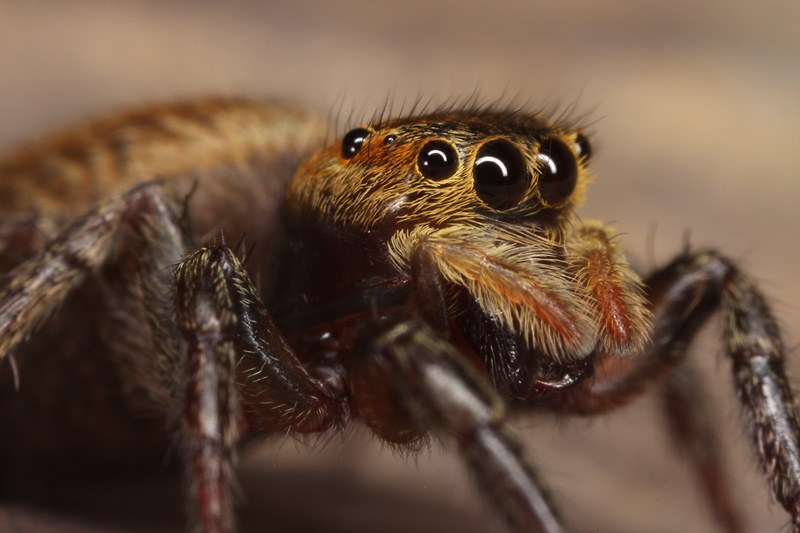 Macro and landscapes (contains spiders!)