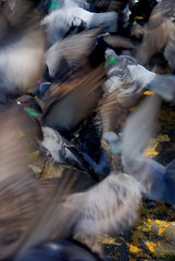 buuuu... (Stephi 2006) Tags: cool pigeons zrich hdr photomatix sigma18200mmf3563dc pentaxk10d