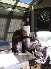 sniff (kukita) Tags: cats max kittens jinx