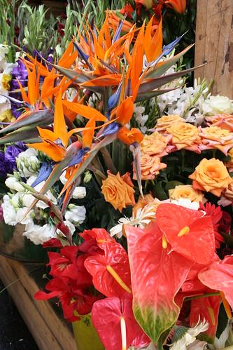 helicornia, roses, anthuriums, etc