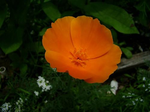 Wildflower3-5-25-09