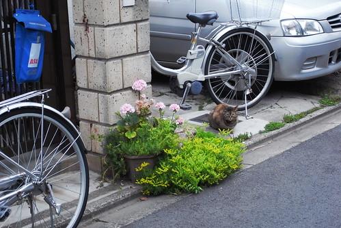 Today's Cat@20090525