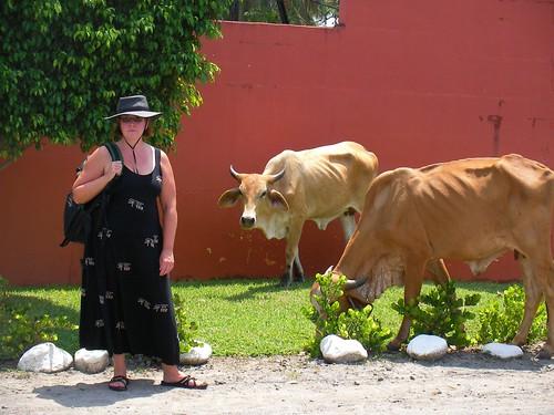 Darusha & Cows