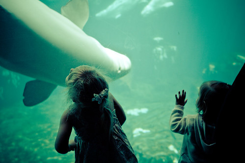 Girls amazed by Beluga's