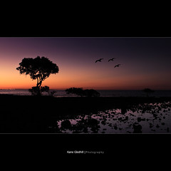 Into the deep purple haze with the fog lights turned off. ([ Kane ]) Tags: sky colour tree water birds rocks glow purple dusk cleveland australia brisbane da qld queensland kane gledhill digitialart kanegledhill kanegledhillphotography