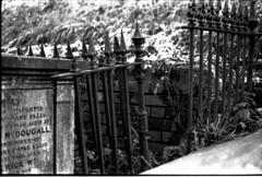 Exeter Graveyard (1977)