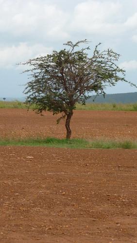 africa 210a